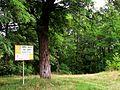 """Дальше - заповедная территория - природный памятник-резервация """"Рудь -Арионешть. - panoramio.jpg"""