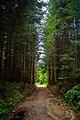 Дорога через ліс. Околиці с.Гута.jpg