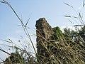 Заброшенное поселение V-XIII века около реки Алара (открыто Индейкиным В.В.) - panoramio.jpg