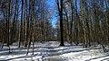 Измайловский лесопарк, тропинка.jpg