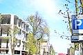 Місто Хмельницький, дерево липи звичайної.jpg