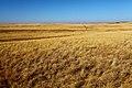 На речке Кураша. Вид в северном направлении - panoramio.jpg