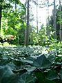 Нікітський ботанічний сад3!.jpg