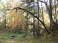 Осенний лес, Алтайский край.jpg