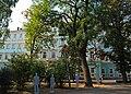 Парк-сквер на Соборній площі (Чернівці) DSC 9094.jpg