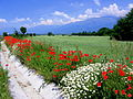 Пролет под Балкана.JPG