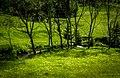 Родопско зелено 2.jpg