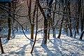 Серед зимових дерев.jpg