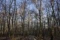 Сирецький дендрологічний парк 41.jpg