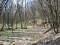 Теребовля теребовлянський лес - panoramio.jpg