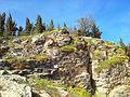 Флора - Канео (Охридско Езеро).jpg