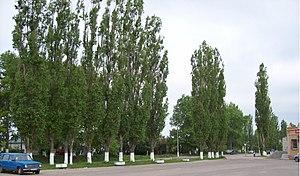 Липецкая область,с.Хлевное,деревья около автос...