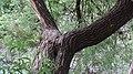 جاذبه های طبیعت - panoramio.jpg