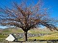 روستای رازان در سایه درخت، جاده بروجرد خرم آباد Razan village, to dear Danny, Zagheh, Lorestan - panoramio.jpg