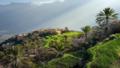 ولايه نخل - سلطنه عمان.png