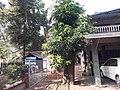 മരങ്ങളിലെ പുനർ യൗവന പ്രക്രിയ 430 .jpg