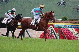 Salios Japanese Thoroughbred racehorse