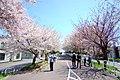 北海道道1148号札幌恵庭自転車道線(Shiroishi cycling road) - panoramio (3).jpg