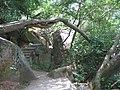 厦门五老峰景区 - panoramio (1).jpg