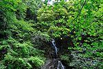 白岩の滝 - panoramio (26).jpg