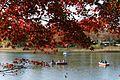 紅葉 - 水鳥の池 - panoramio.jpg
