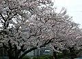 麻里布公園 - panoramio.jpg
