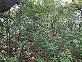 ... near Lingmala Falls (16671356163).jpg