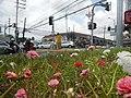 0305jfOrtigas Avenue Santolan Road Streets Landmarks San Juan Quezon Cityfvf 13.jpg