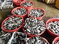 0325jf2016 Rehabilition of Panasahan City of Malolos Bulacan Fishportfvf 09.jpg
