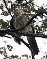 051211 ID 1d eagle ptr - Flickr - Lip Kee.jpg