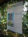 05704jfMidyear Orchid Plants Shows Quezon Cityfvf 39.JPG