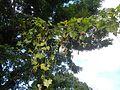 06416jfMabalas Balas Diliman I Salapungan San Rafael Upig Ildefonso Bulacan Roadfvf 08.jpg