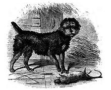 """A drawing of a black dog with a rounded head, standing to a dead rat."""