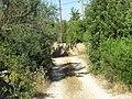 08-06-2017 Via Algarviana long distance hiking trail, Alfarrobeiras (4).JPG