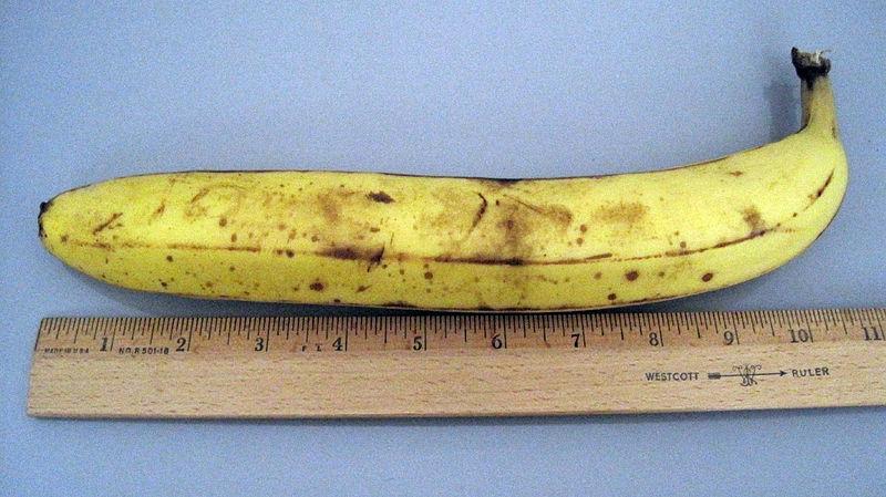 File:10.5 inch banana.JPG