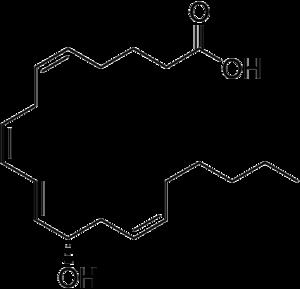 12-Hydroxyeicosatetraenoic acid - Image: 12 Hydroxyeicosatetraen oic acid