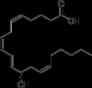 12-Hydroxyeicosatetraenoic acid chemical compound