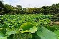 130706 Hokongoin Kyoto Japan11bs3.jpg