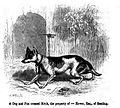 165. Dog x Fox cross.JPG
