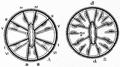 1911 Britannica-Anthozoa-Gonactinia prolifera.png