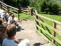 2008 07 15 Bird Care Centre of Castel Tyrol 60775 D9774.jpg