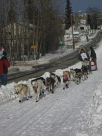 2008 Iditarod Anchorage (2312505570).jpg