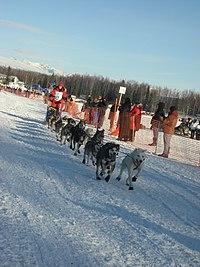 2008 Iditarod Willow (2312964634).jpg