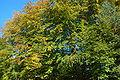 2009-10-herbst-by-RalfR-17.jpg