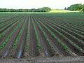 20140606 Landschap Oostelijk Flevoland Visvijverweg Kamperhoekweg.jpg