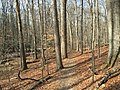 2016-02-08 11 52 20 View north along the Gerry Connolly Cross County Trail between Miller Heights Road and Vale Road in Oakton, Fairfax County, Virginia.jpg
