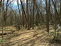 2016-03-01 14 06 54 View down a trail along a severely eroded tributary of Little Difficult Run within Fred Crabtree Park in Reston, Fairfax County, Virginia.jpg