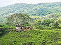 20160128 Sri Lanka 4115 Sinharaja Forest Reserve sRGB (25648608072).jpg