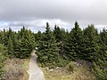 2019-10-27 11 56 52 View northeast across a Red Spruce forest from the observation tower on Spruce Knob in Pendleton County, West Virginia.jpg