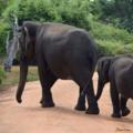 20190605 192931 0000 elephants.png